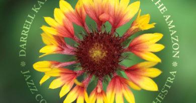 A Wallflower In The Amazon